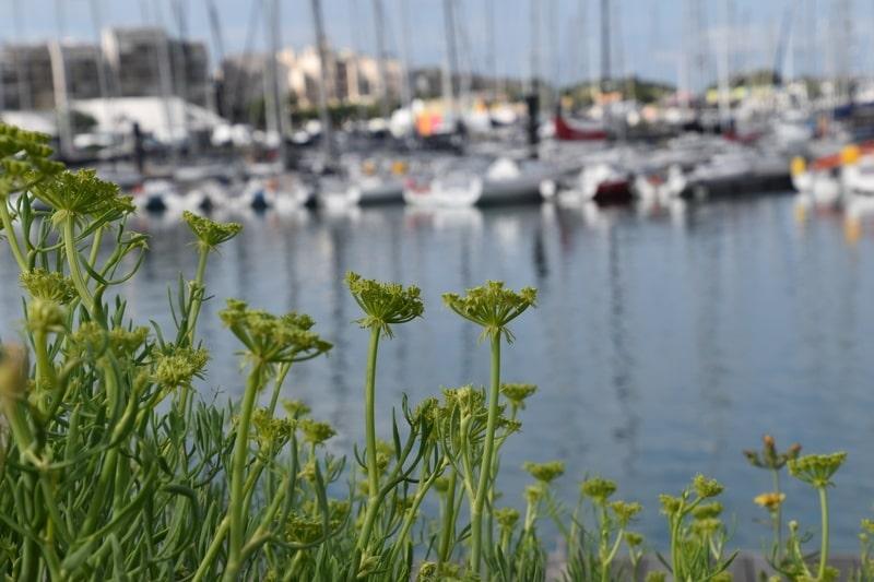 Criste Marine, Port de la rochelle